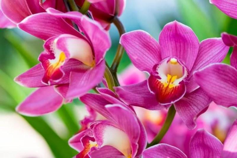 Cosa fare quando l'orchidea ha i fiori appassiti