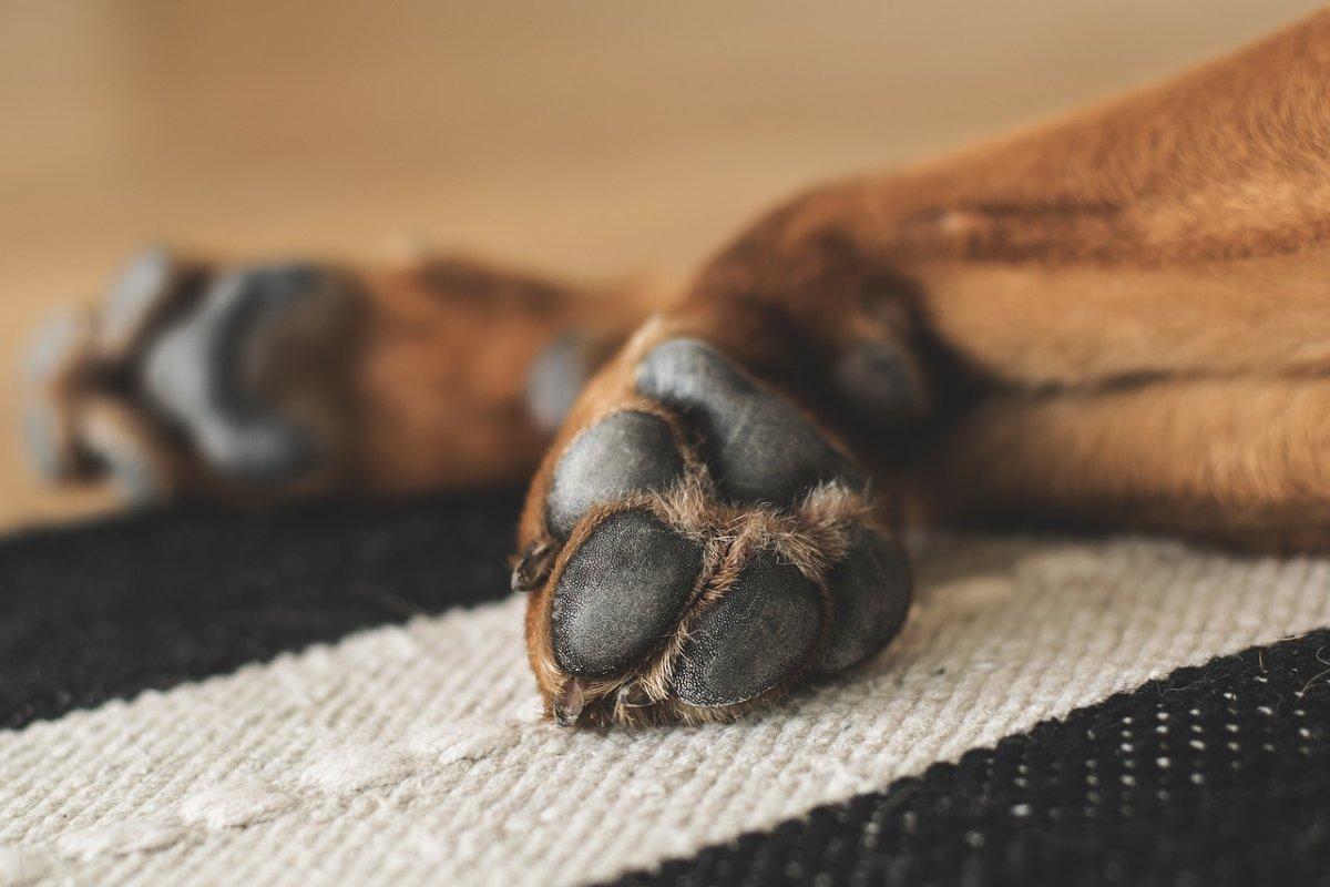 Come si usano i tutori per cani per le zampe posteriori